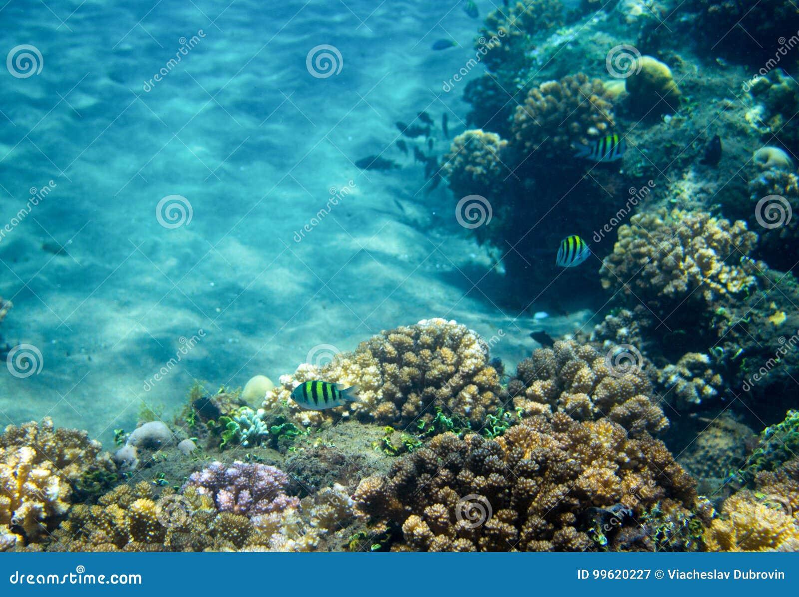 Sea fish school in coral reef. Tropical seashore inhabitants underwater photo.