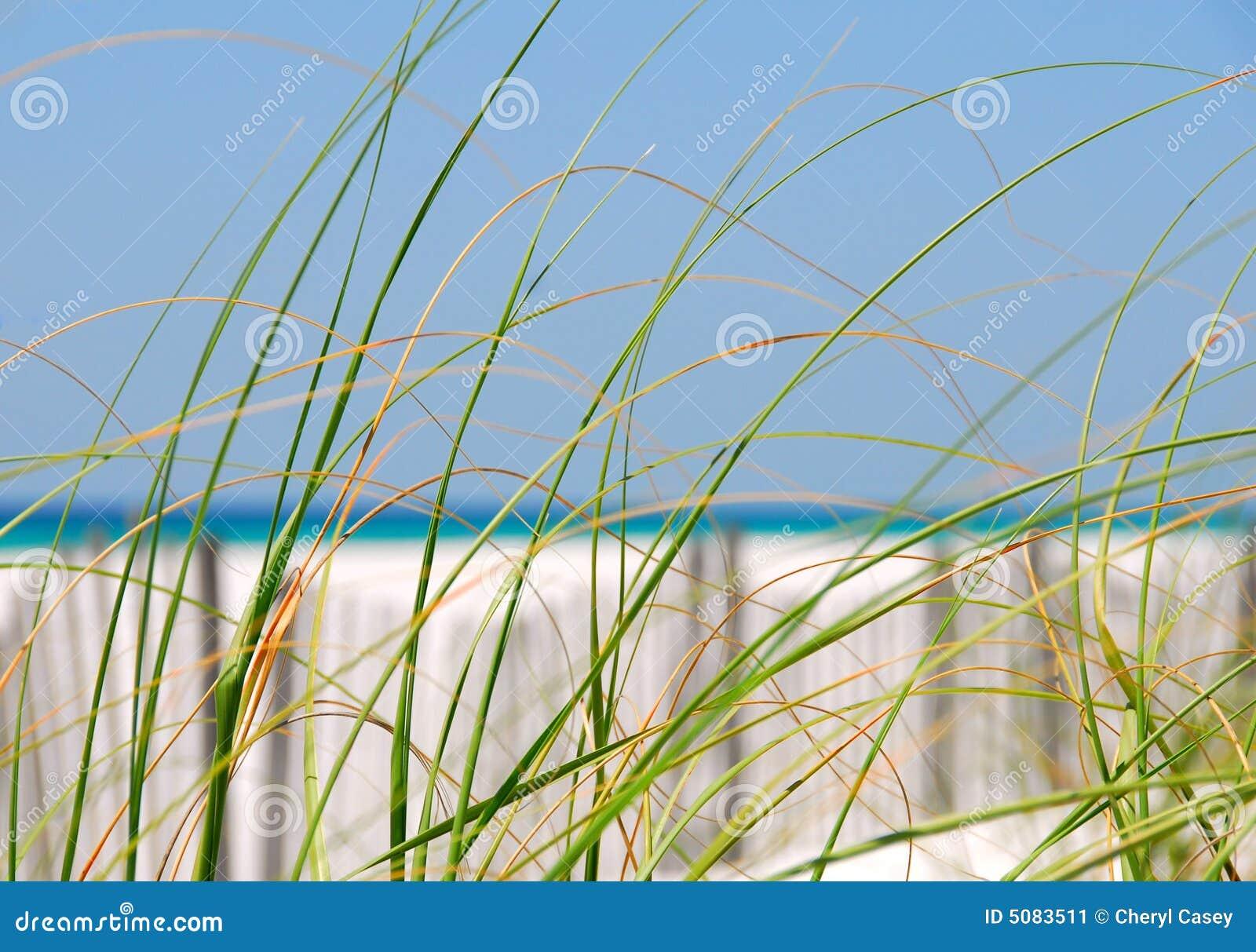 Sea Grasses on Dune