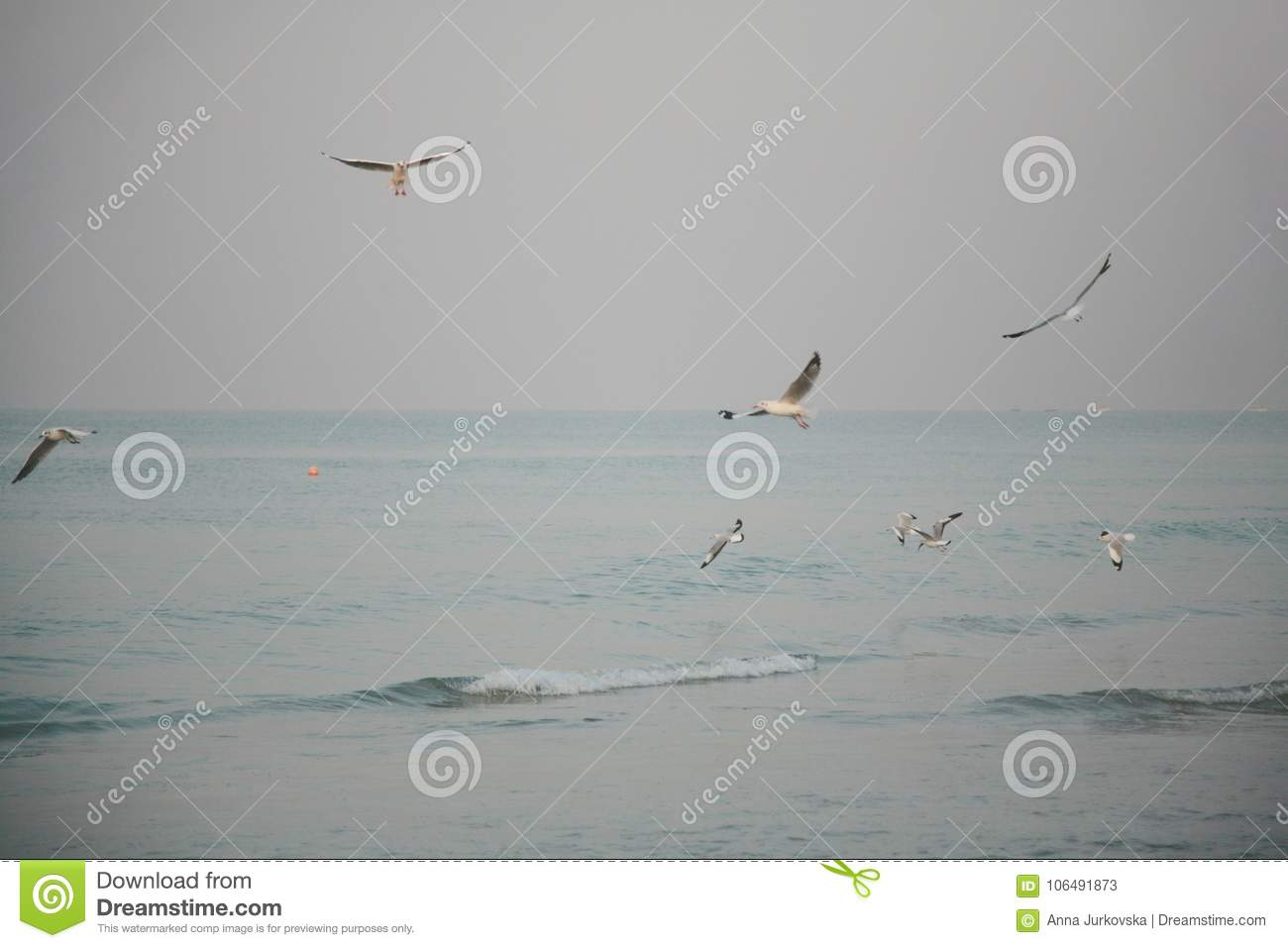 Sea gulls over the shallow waters