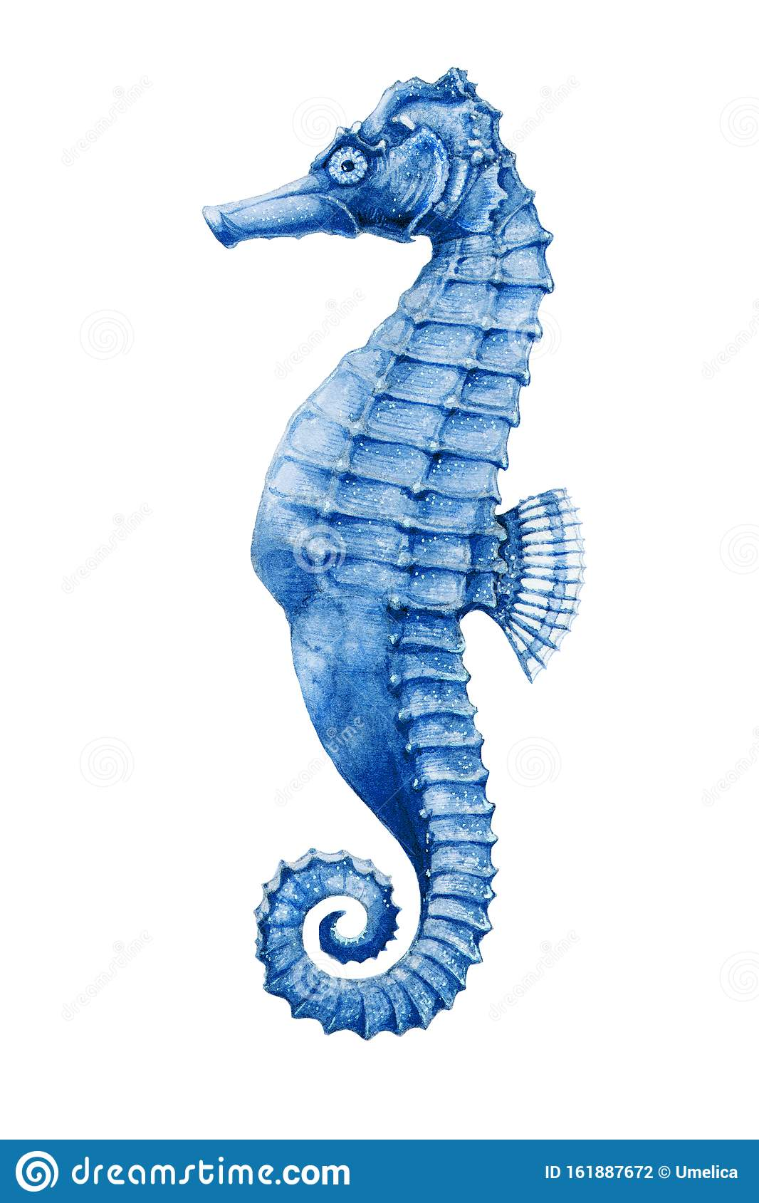 A Sea Horse Bright Watercolor Illustration Hand Drawn Small Tropical Seahorse Fish Aquarium Colorful Creature Isolated On Whi Stock Illustration Illustration Of Drawing Hippocampus 161887672
