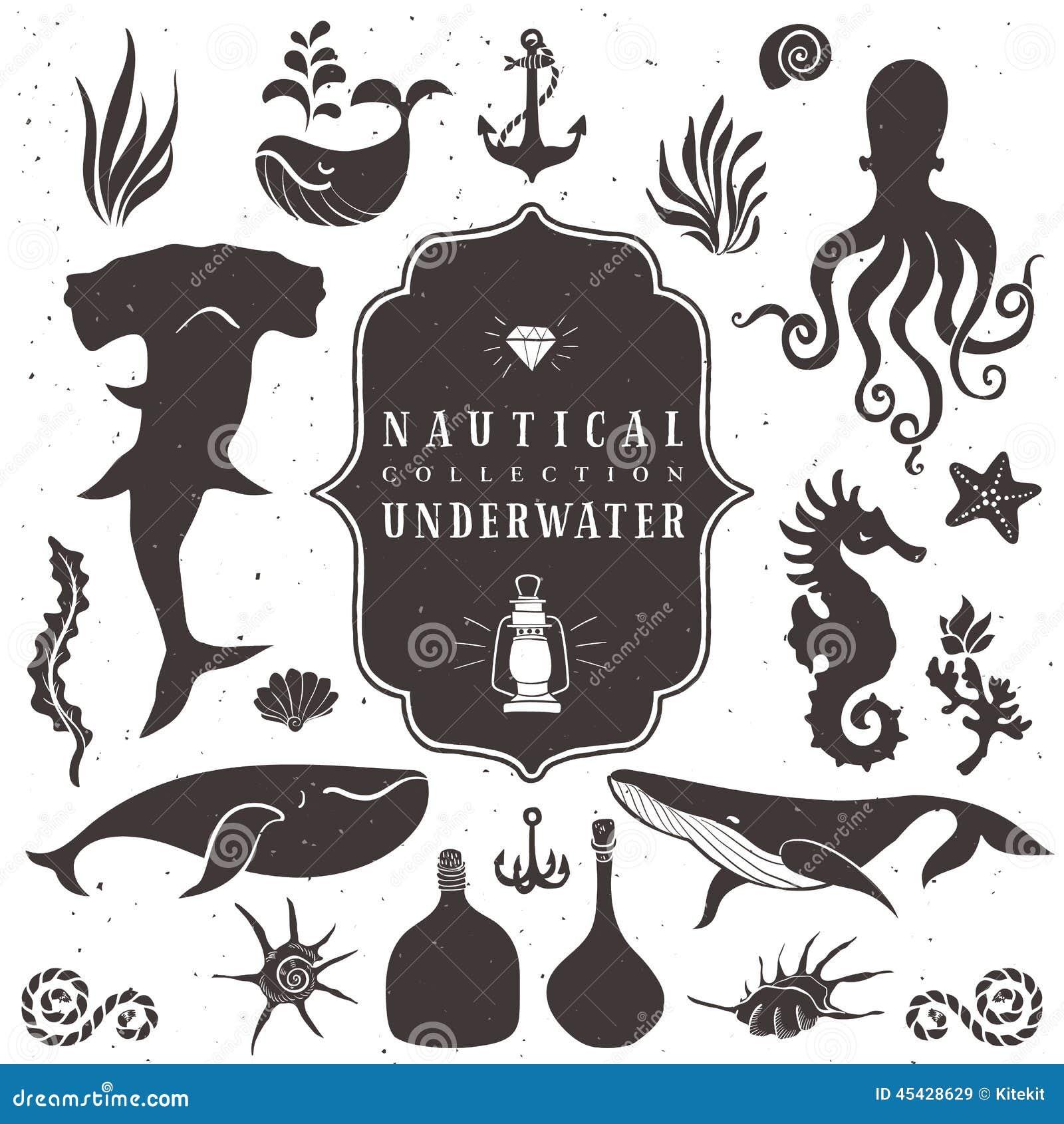 Sea life, marine animals. Vintage hand drawn elements