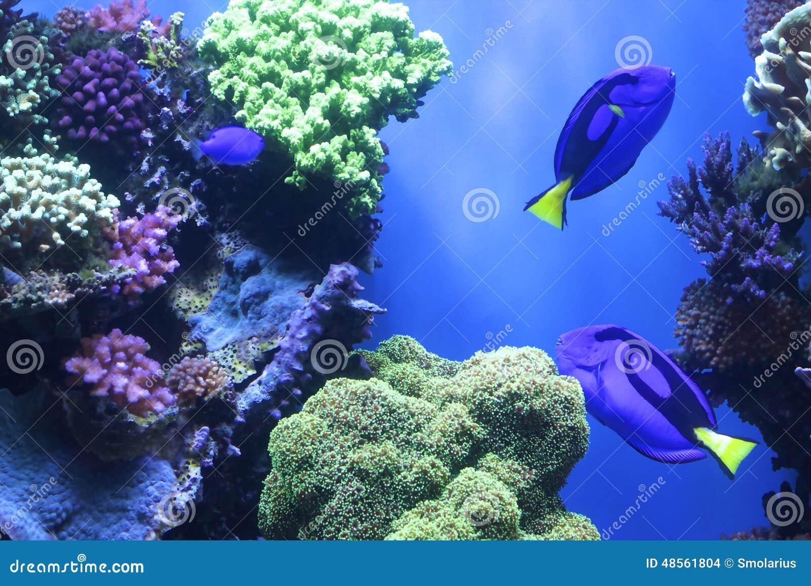 Sea Life Stock Photo Image 48561804
