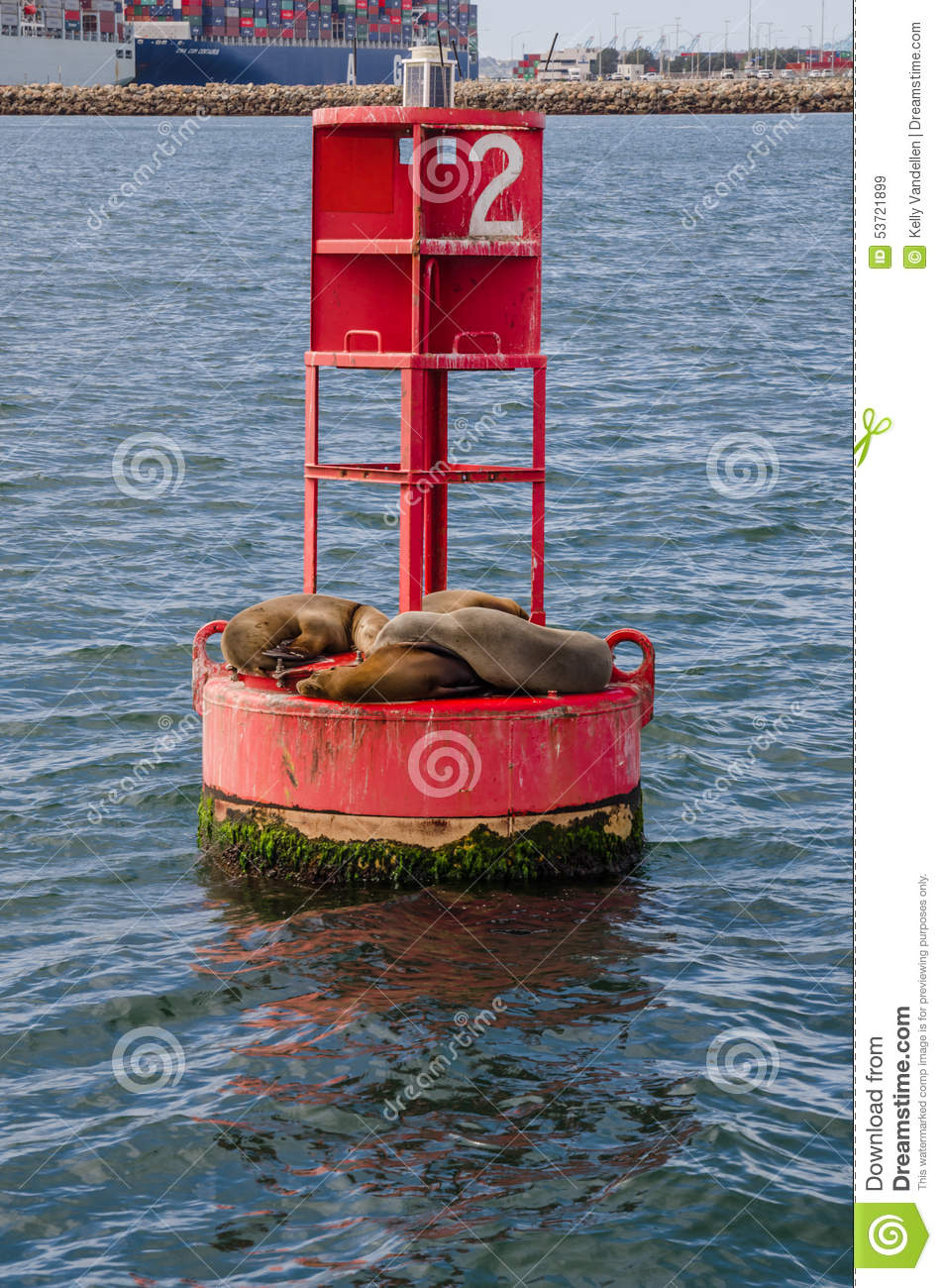 Sea Lions Cuddle on a Red Buoy in Long Beach Habor Vertical