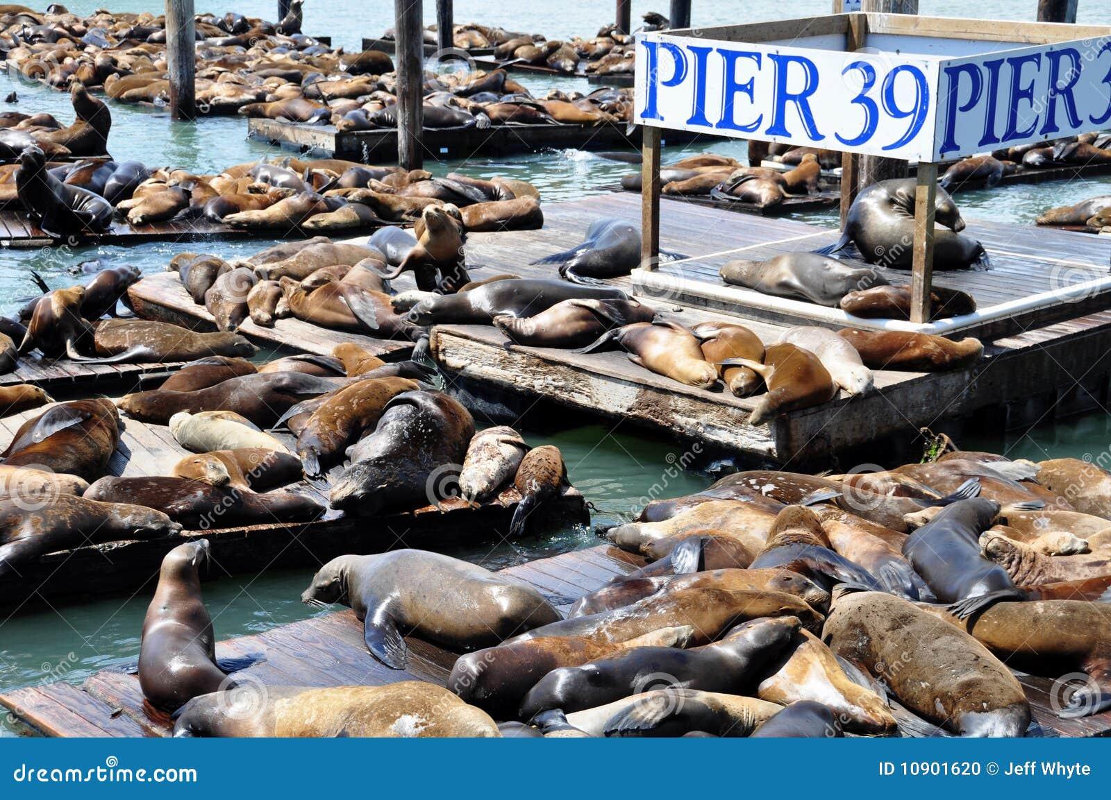 Sea Lions, pier 39