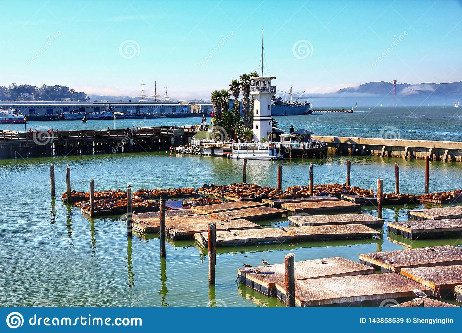 Sea lions at Pier 39 a popular tourist attraction