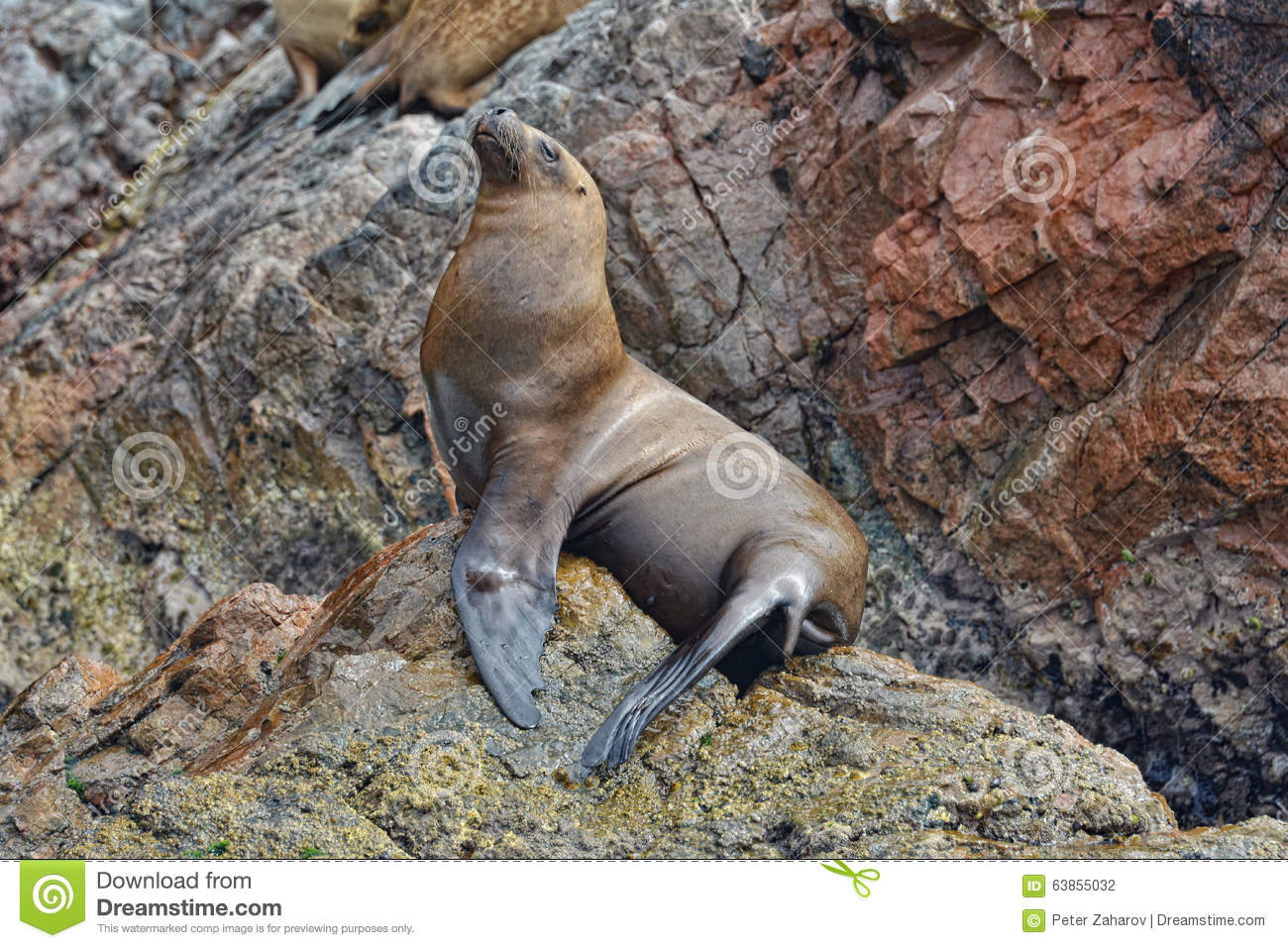 Sea Lions On Rocks Of The Ballestas Islands. Peru. Stock ...