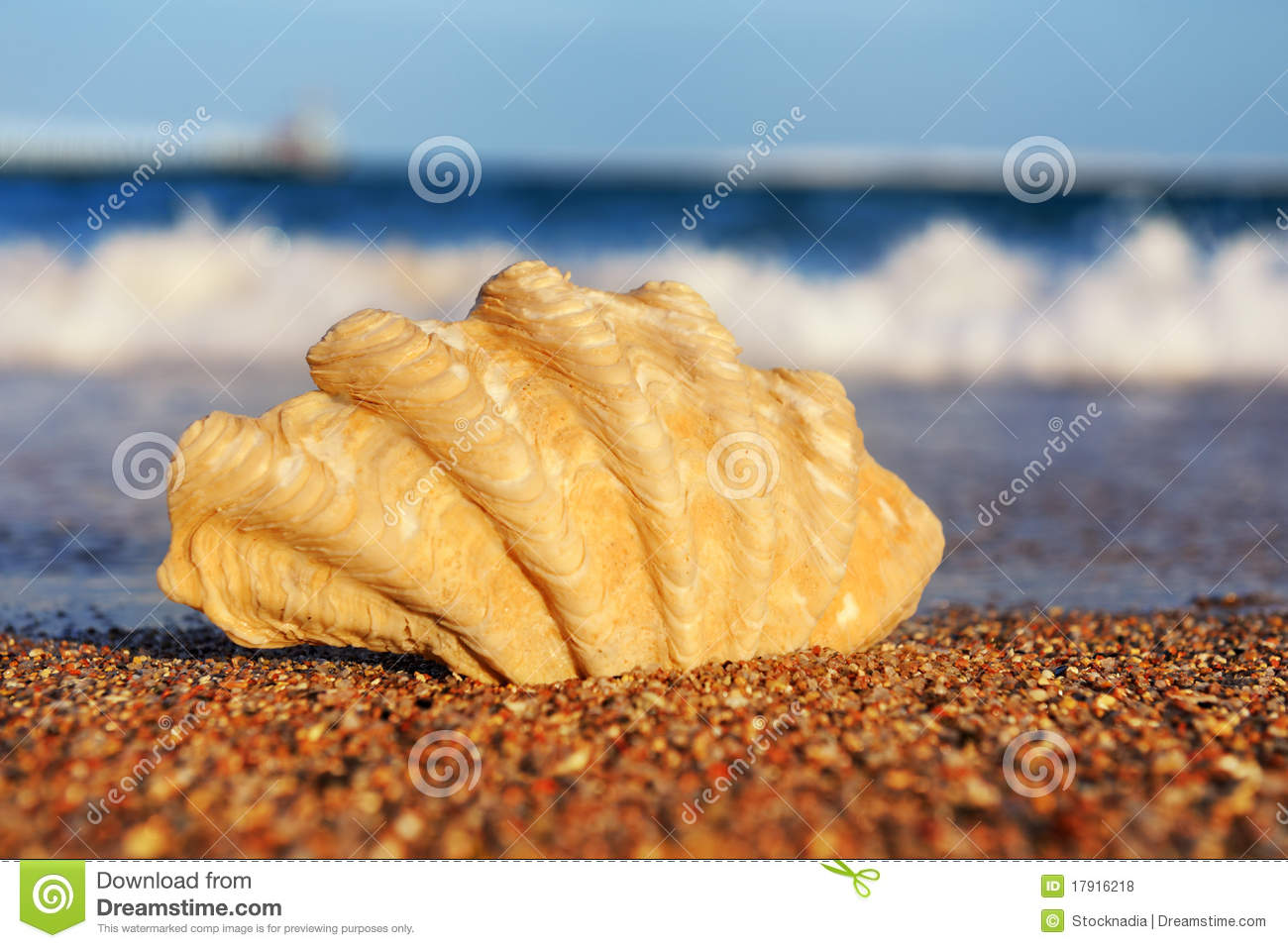 royalty free stock images seashells sand close image
