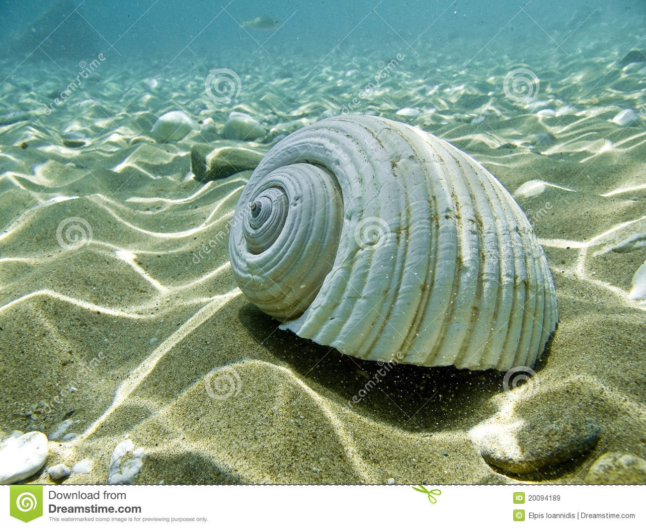 sea shell on a sandy sea bed.