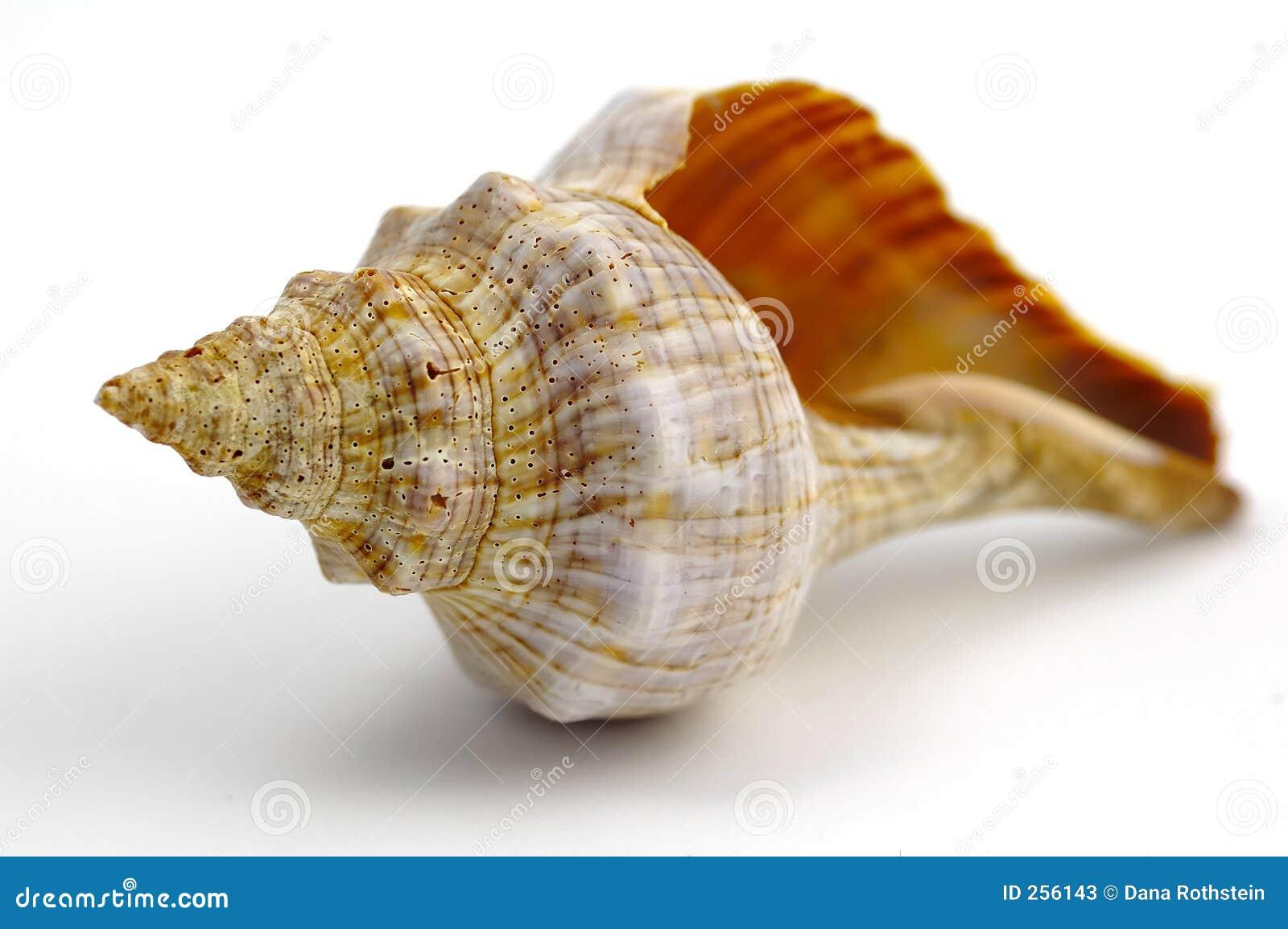 Sea Shell Stock Photos - Image: 256143