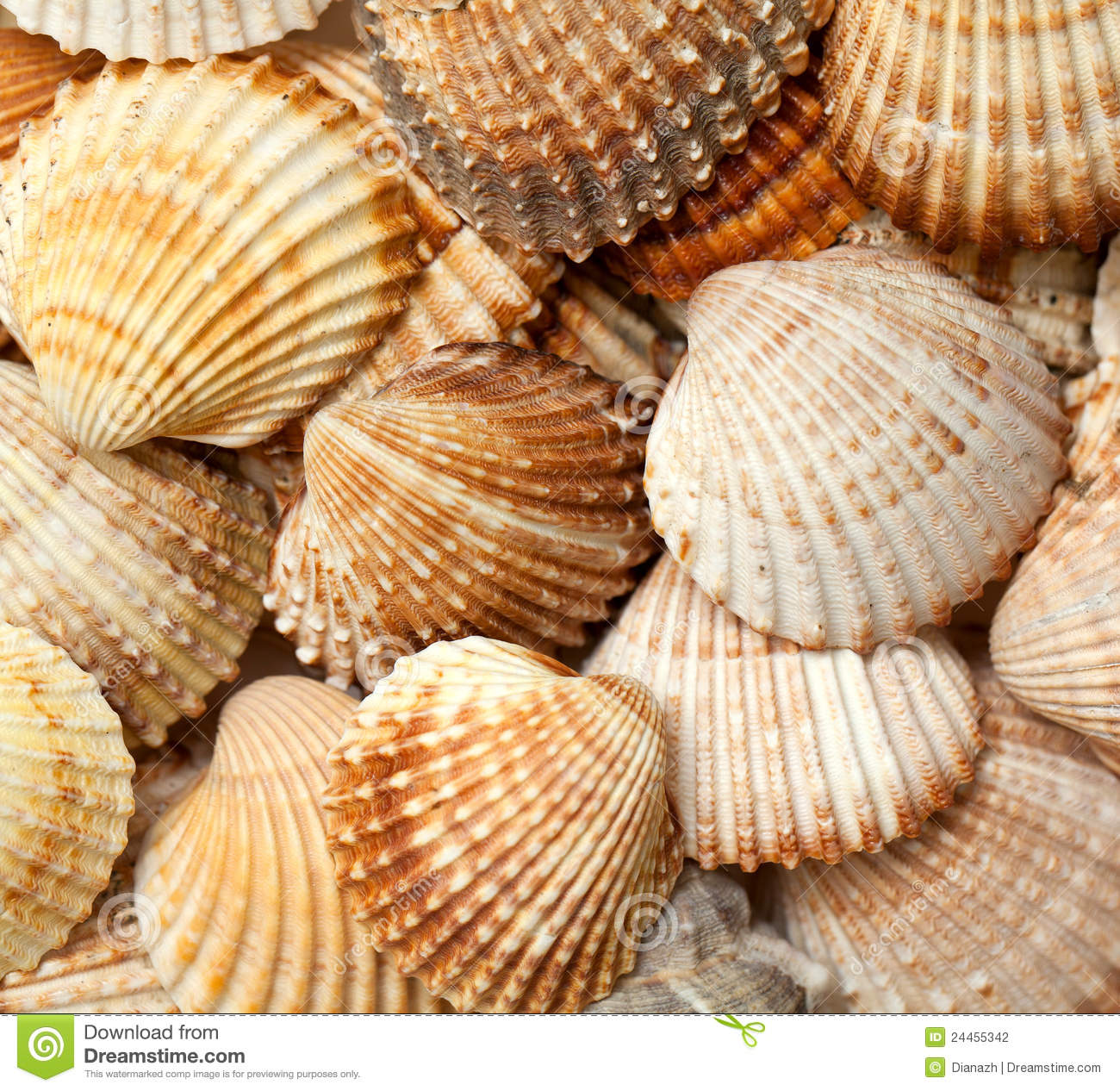 Sea Shell Background Stock Photography - Image: 24455342