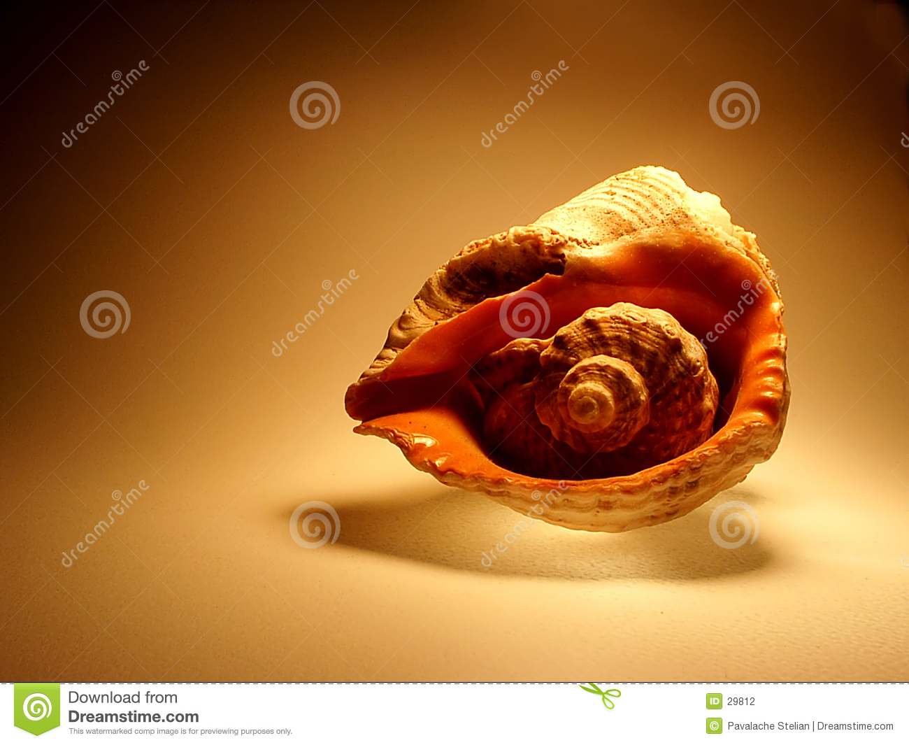 Sea shell on Brown Background