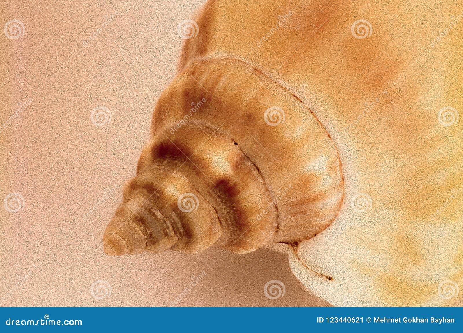 Sea shell close-up background image