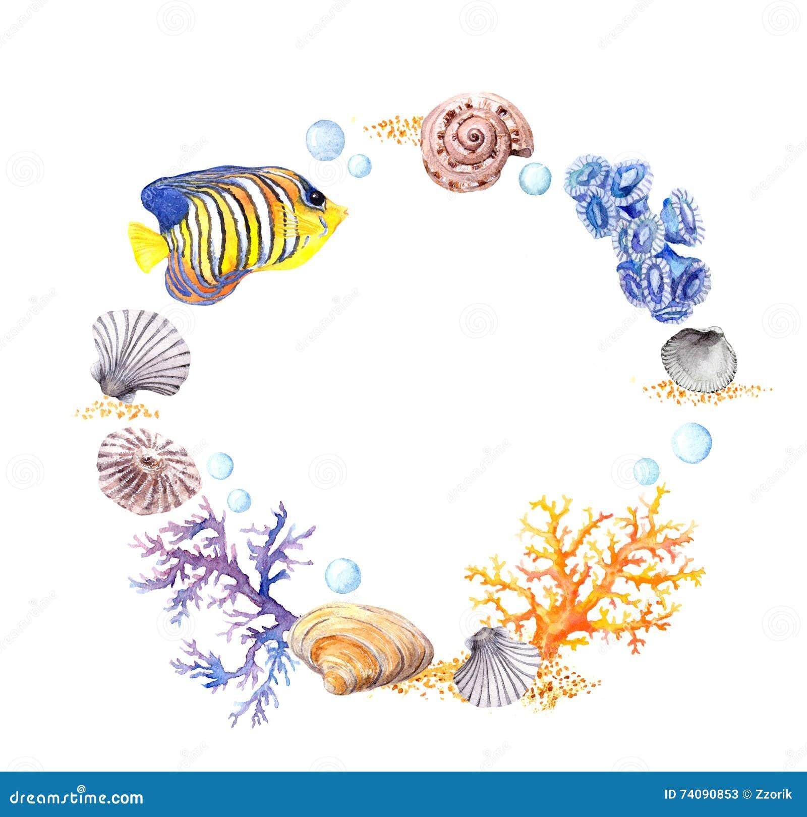 sea shell  coral  sand summer beach wreath border seaweed vector images seaweed illustration vector