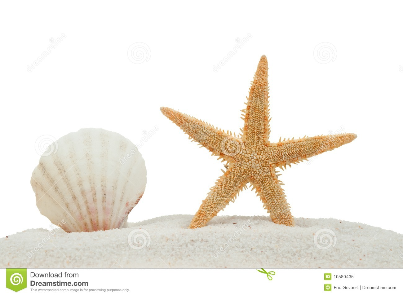Sea shell and starfish on sand isolated