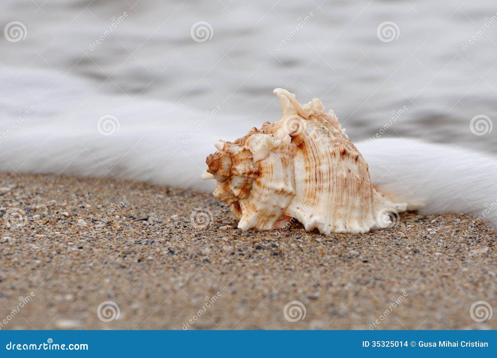 The Mollusk Dusk