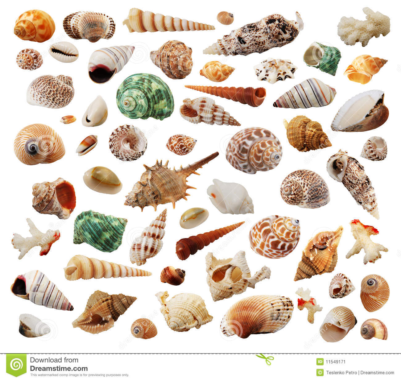 Animated Seashells
