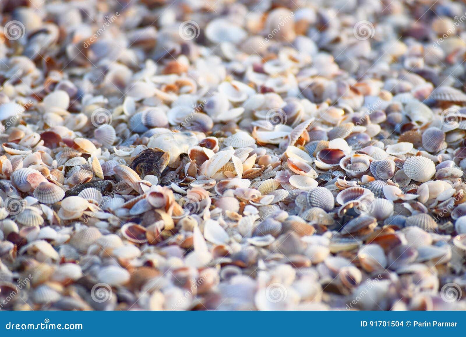 Sea Shells - Abstract Marine Background