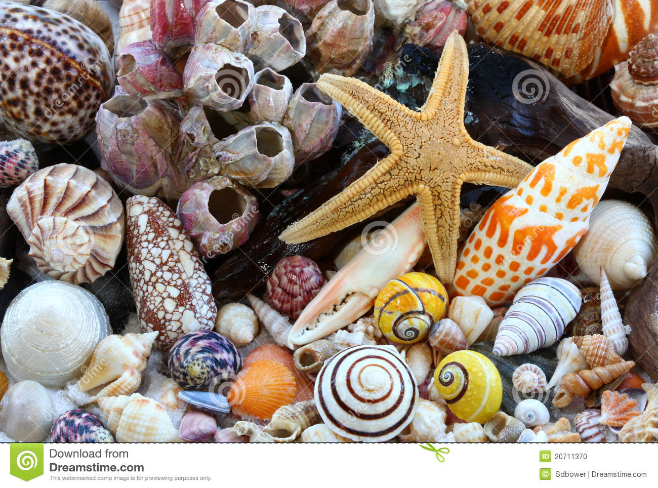 Sea Shells,Barnacles, Driftwood, Sea Star On Beach Stock Photo - Image ...
