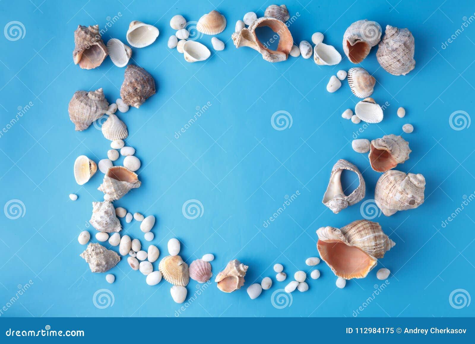 Sea shells on blue, vacaton concept on plain background