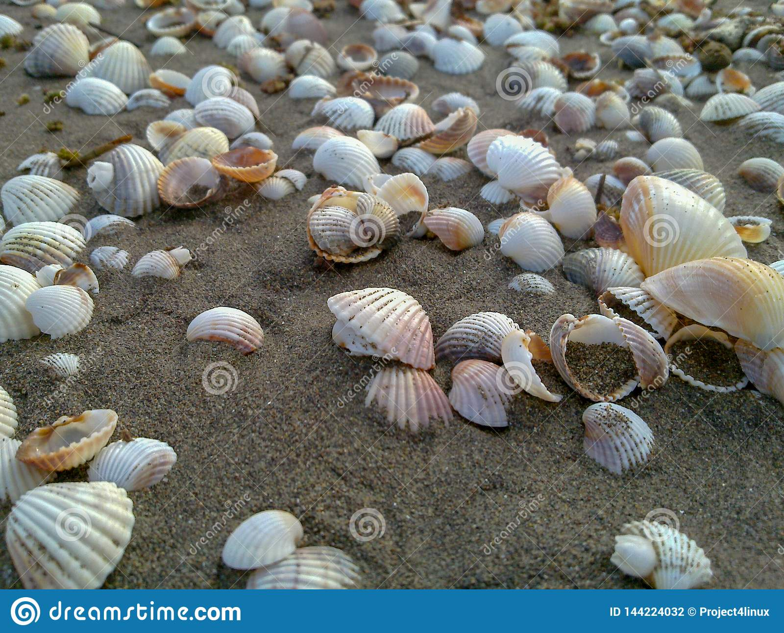 Sea Shells form a trail on the sand at caspian beach, Iran, Gilan