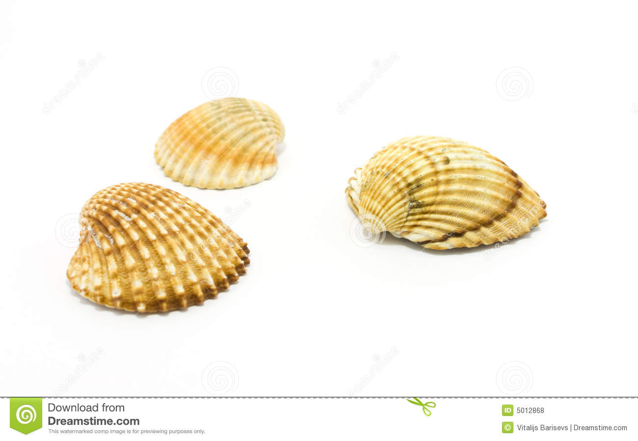... Shells Isolated On White Royalty Free Stock Photos - Image: 5012868
