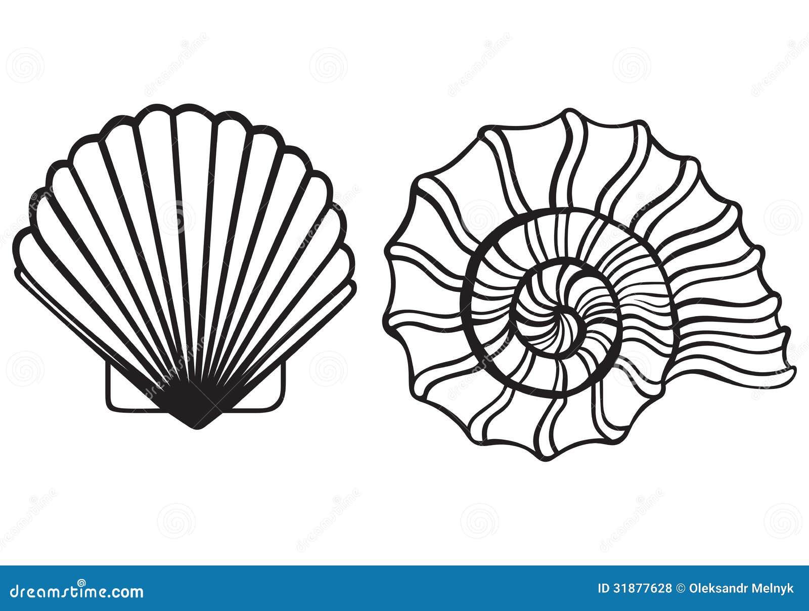 Sea Shells Royalty Free Stock Photos Image 31877628
