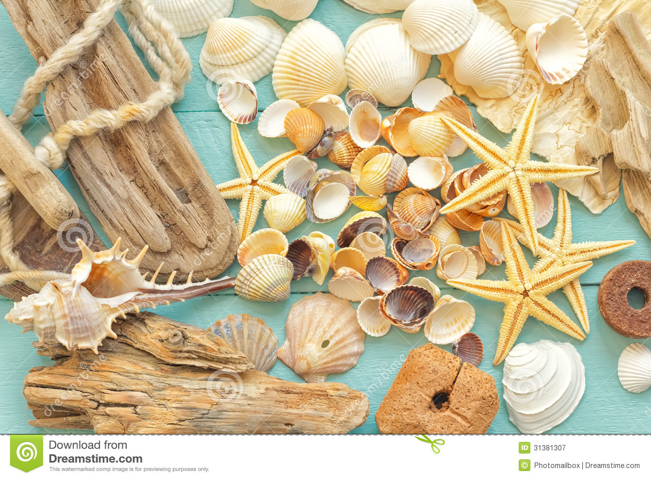 Sea Shells Royalty Free Stock Photography - Image: 31381307