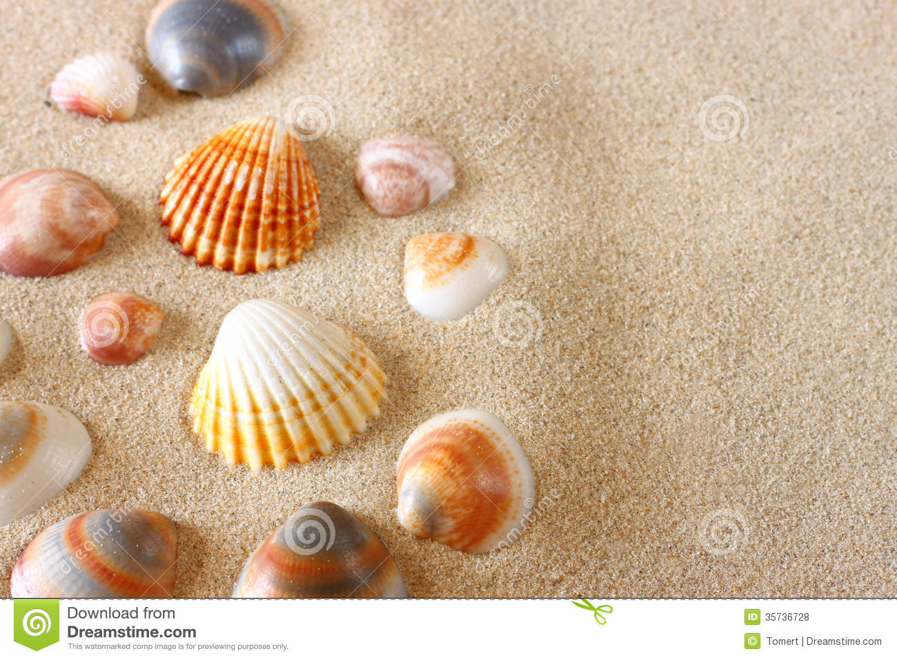 Download comp Sea Shells On Sand At