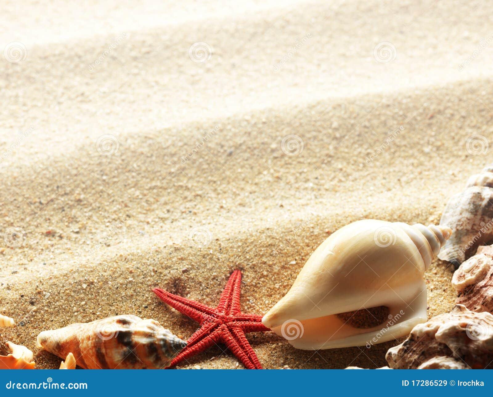 Sea Shells on Sand Border