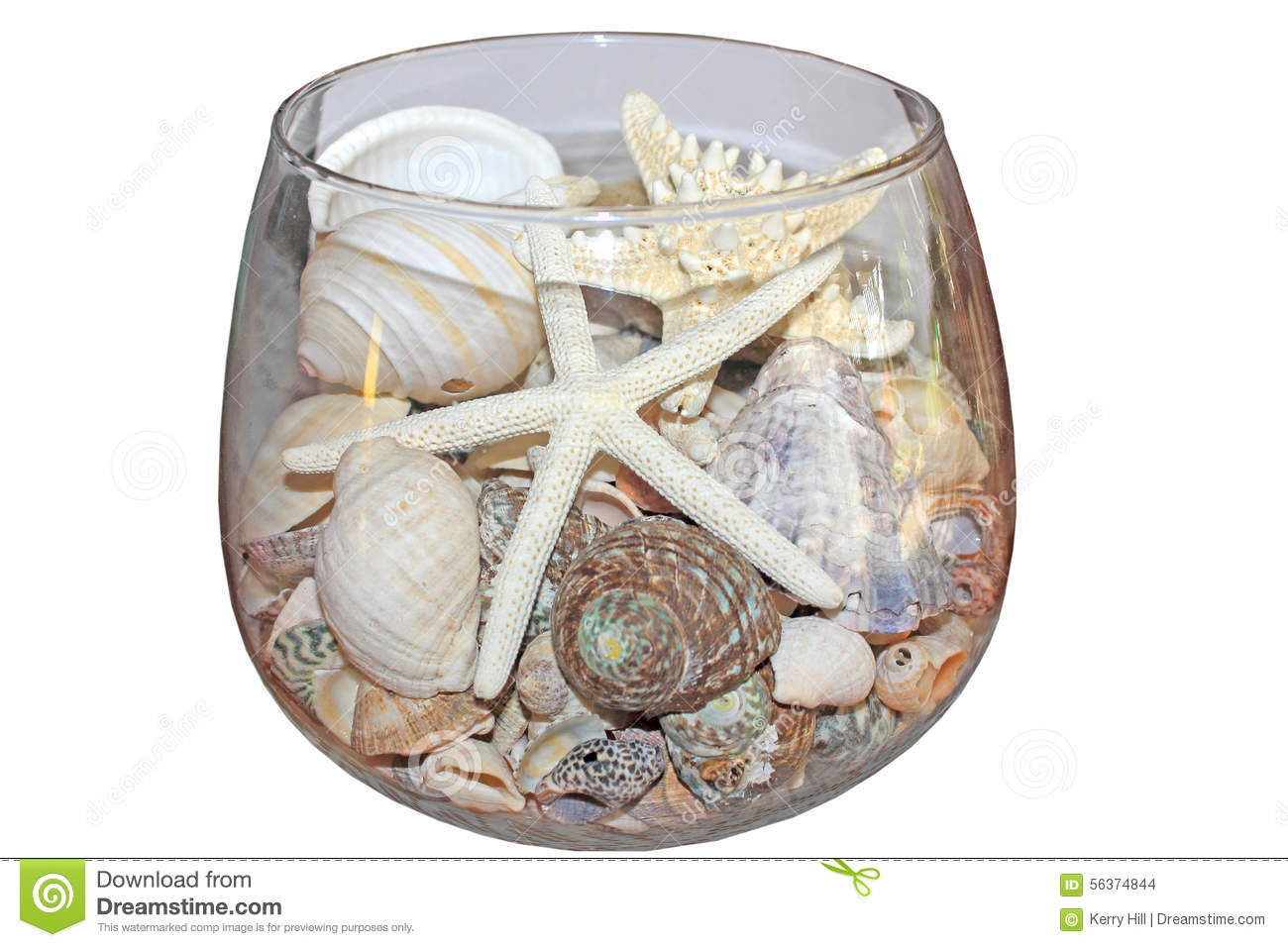 sea shells and starfish in glass bowl stock photo image of nature