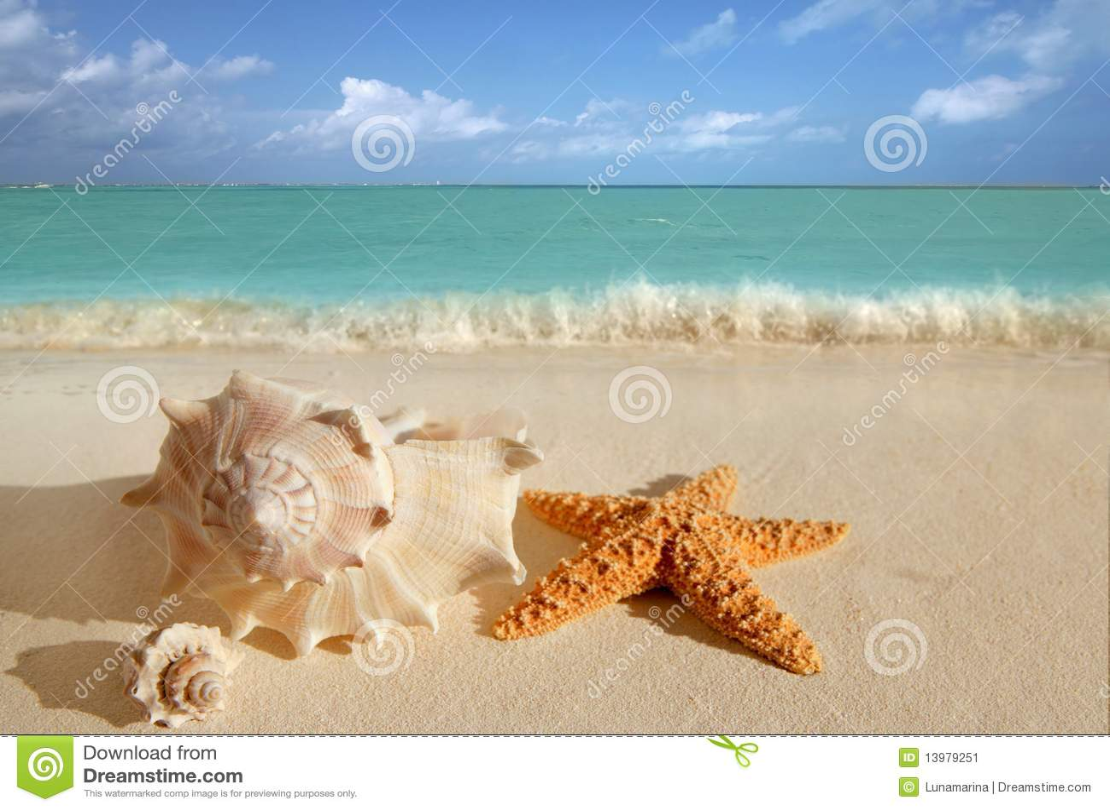 Sea shells starfish sand turquoise caribbean