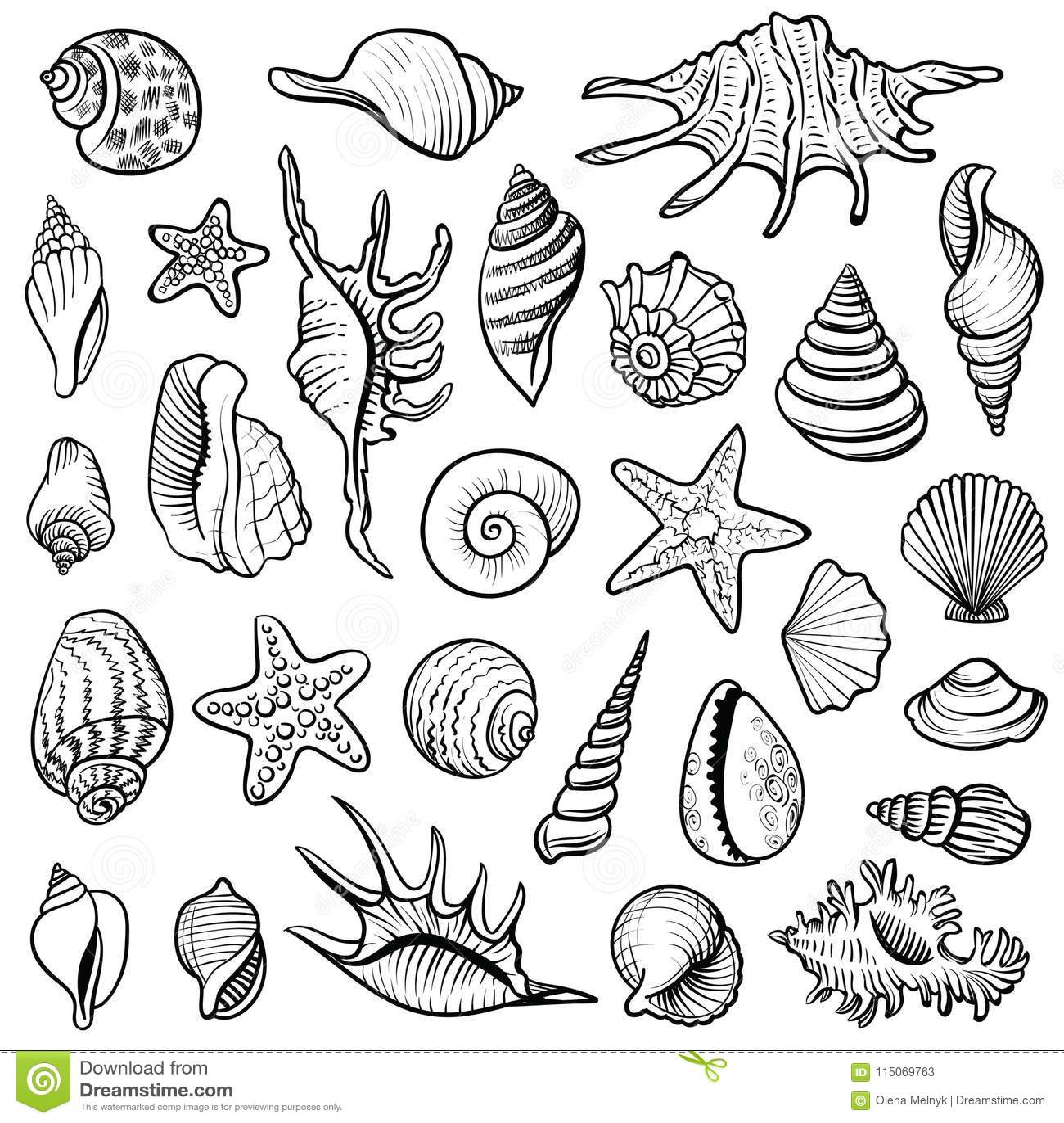 Sea shells vector line set black and white doodle illustrations