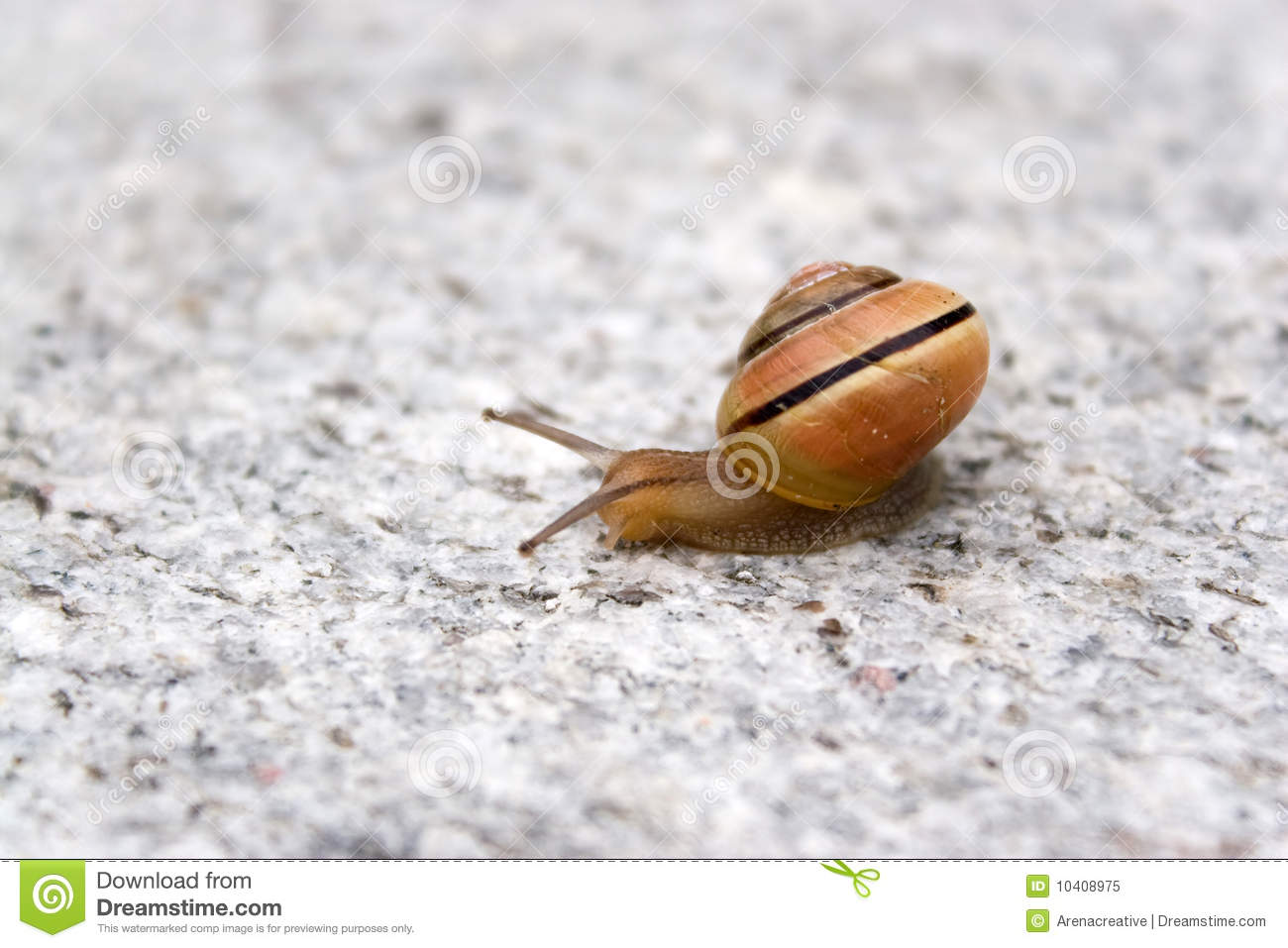 Sea Snail Royalty Free Stock Photo - Image: 10408975