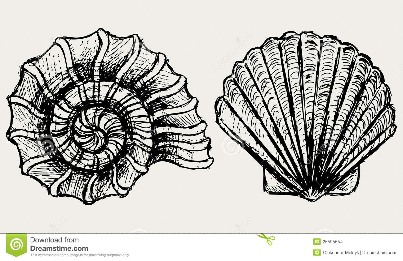 Sea Snail And Scallop Shell Stock Images Image 26595654