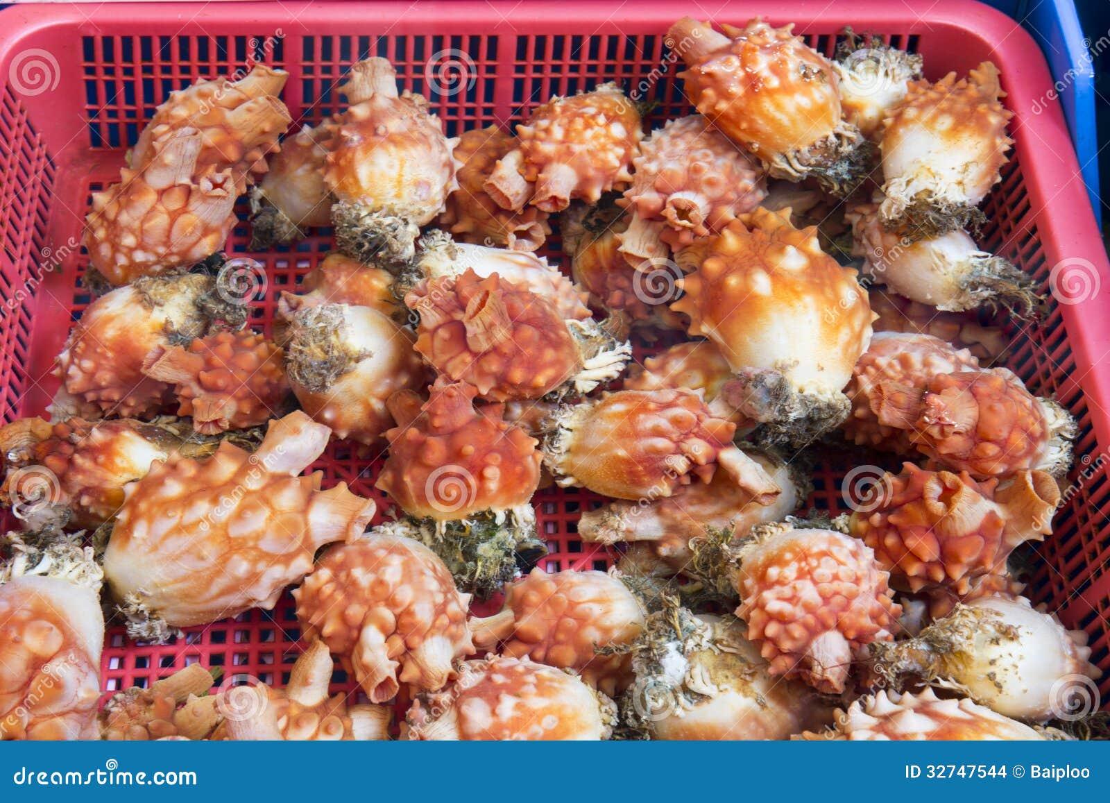 sea squirt for sale Munchkin Squirtin' Sea Buddies Bath Toy - 5  - Best Buy Canada.