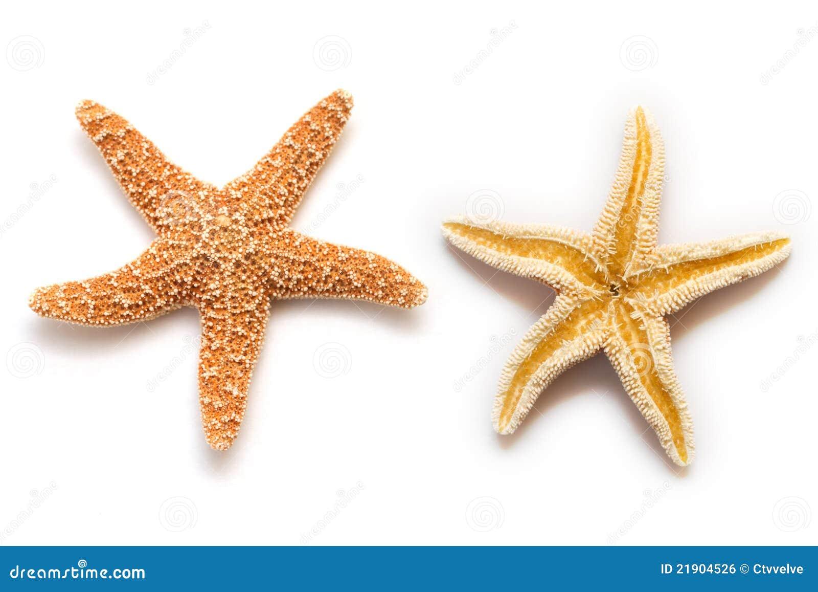 sea star isolated stock photo image of star  beach  life ocean animal clip art free ocean animals clip art for kids