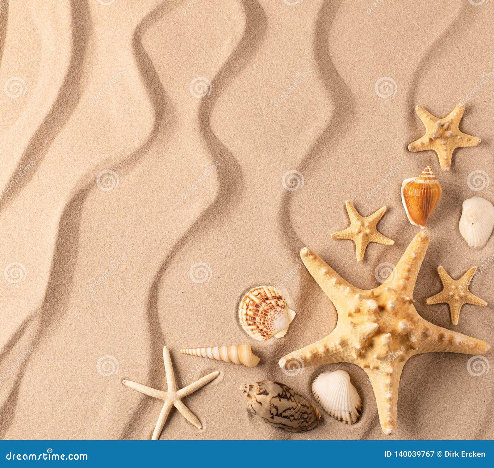 Sea star and shelfish on the rippled sand