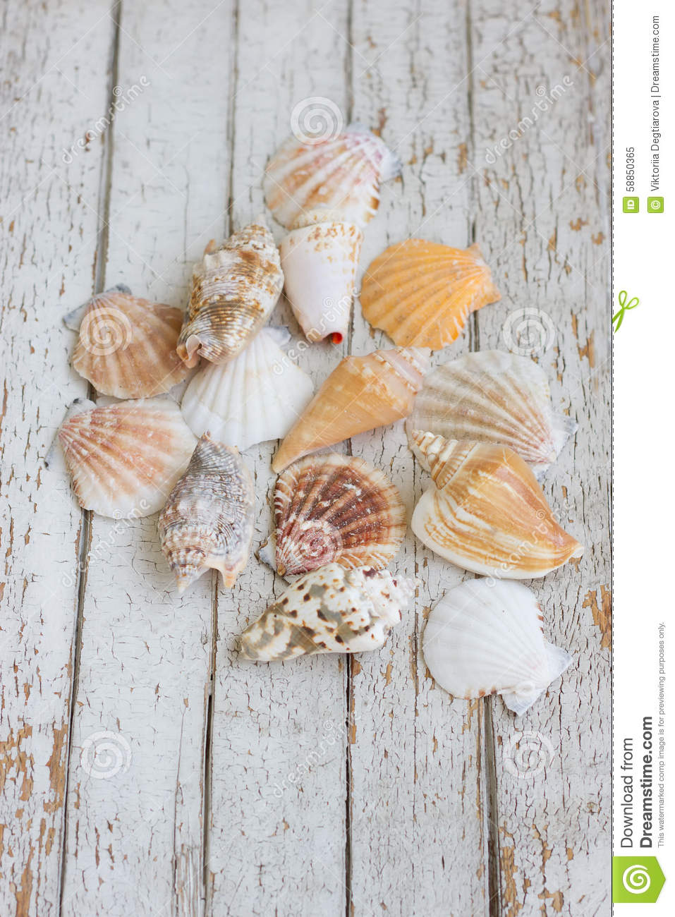 Sea theme border background with nseashell on white for Lampadaire style shabby