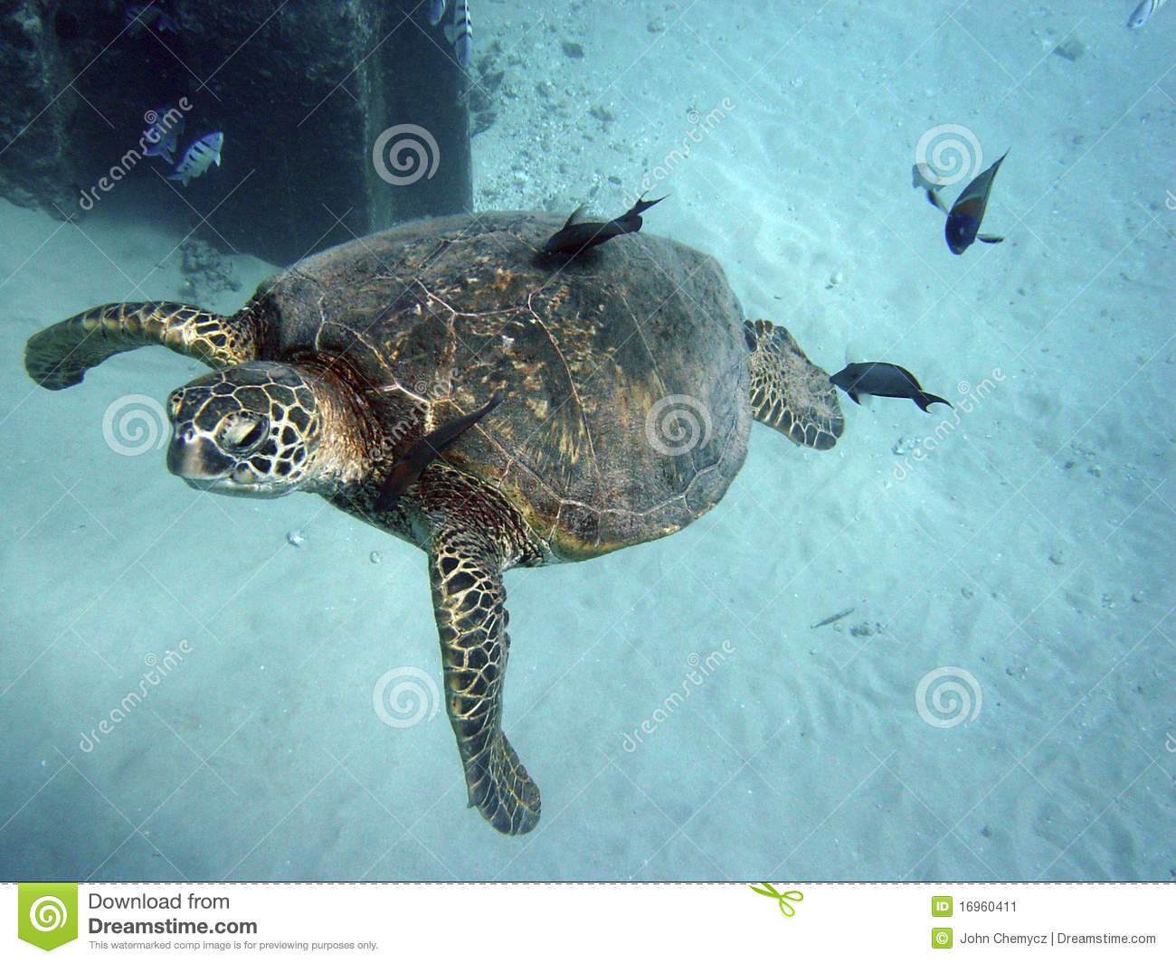 Z4hhVeRFtAD as well Swimming With Sea Turtles In Hawaii moreover Frey  28Fisheye Placebo 29 as well 90 besides Profile. on 77685