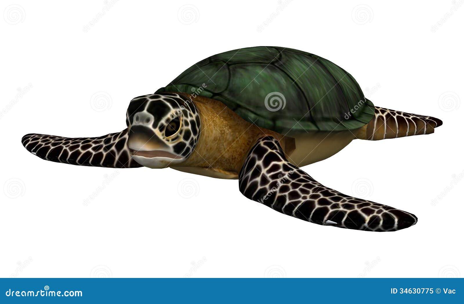 turtle white background - photo #14