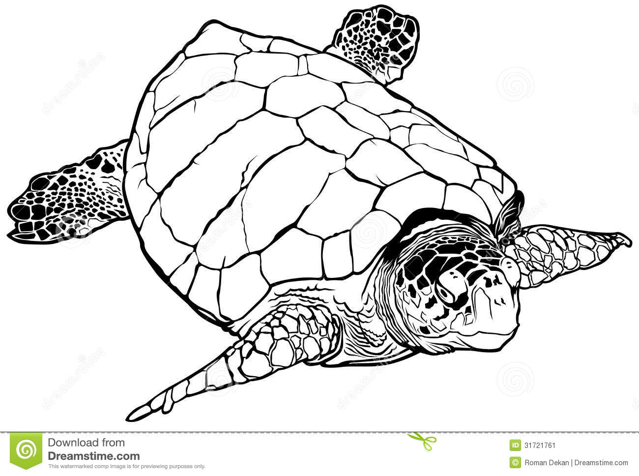 green sea turtle coloring page - sea turtle stock vector image of illustration life
