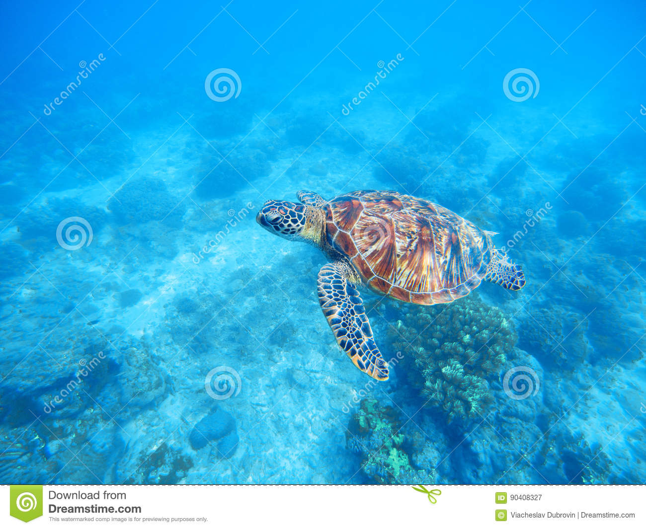 Sea Turtle In Shallow Water. Sea Bottom With Sand And