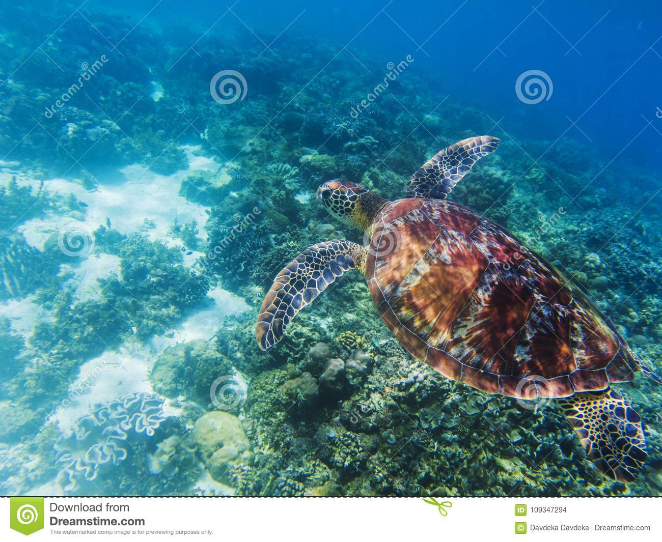 Sea Turtle In Tropical Seashore Underwater Photo Cute Green Turtle
