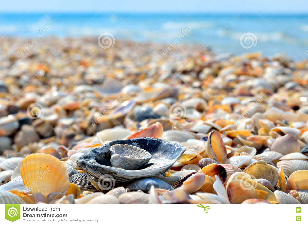 sea waves washed clean beach made of shells landscape on ocean wave clipart png ocean wave clip art black white