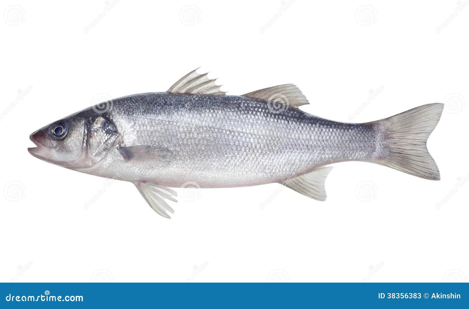 Seabass dos peixes