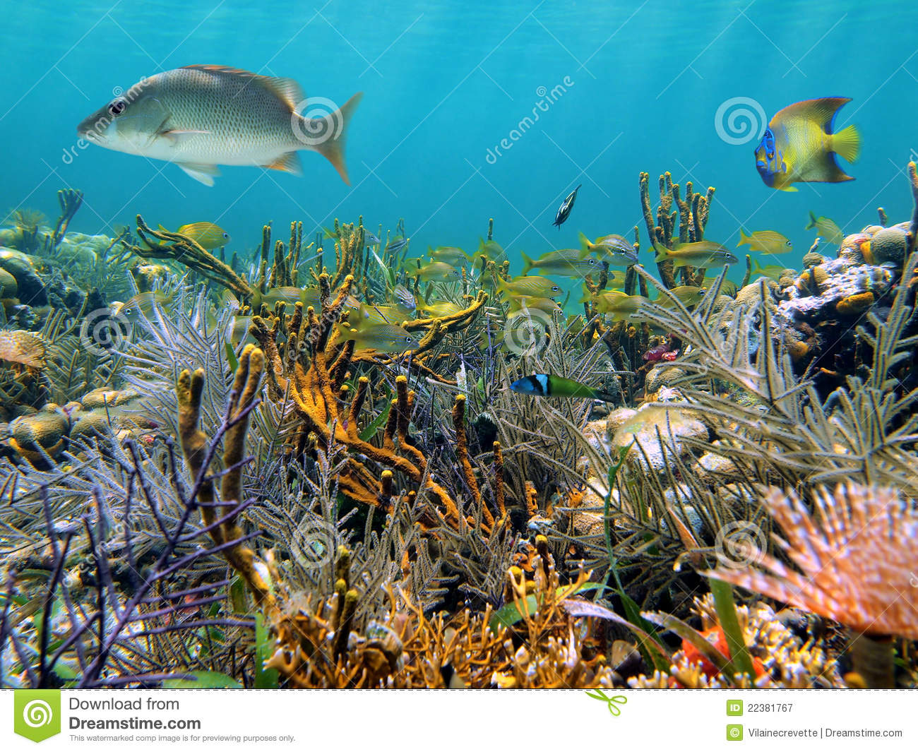 Seabed Royalty Free Stock Photography