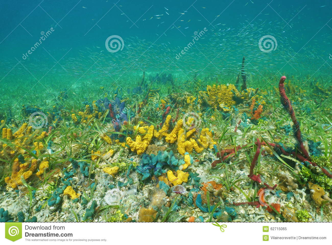 Underwater Scenery With Colorful Marine Life Stock Photo ... |Colorful Underwater Life