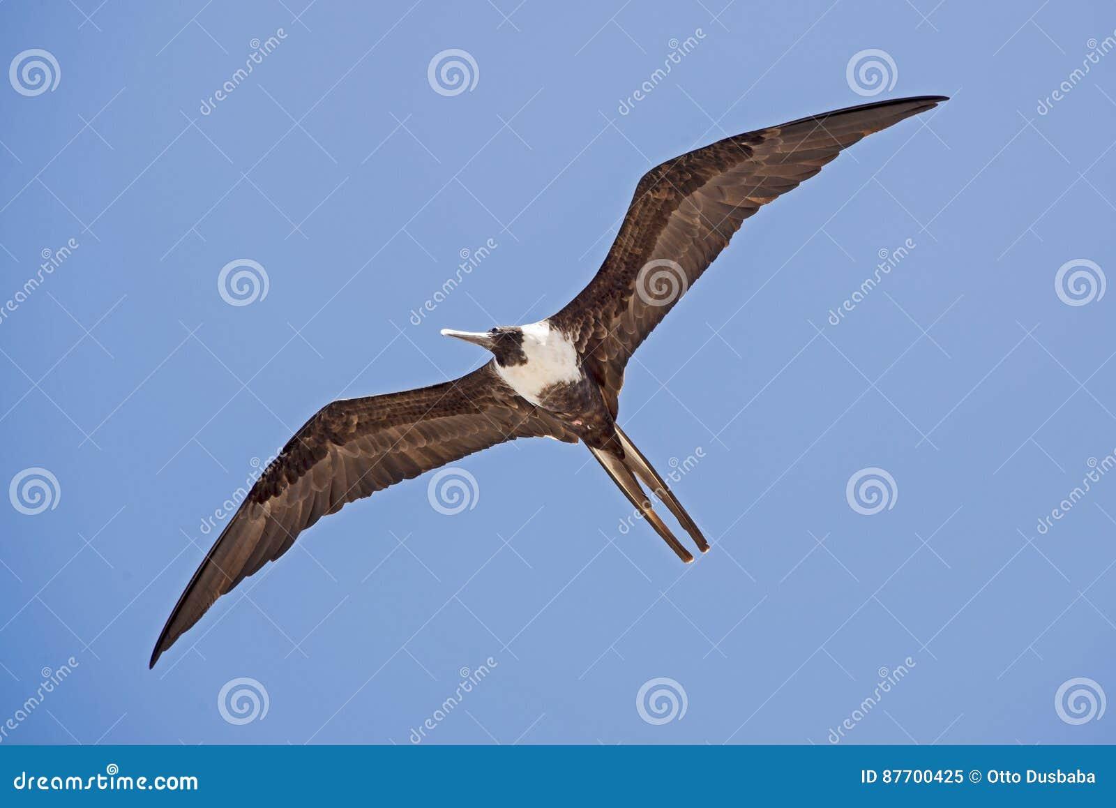 Seabird soaring in the sky