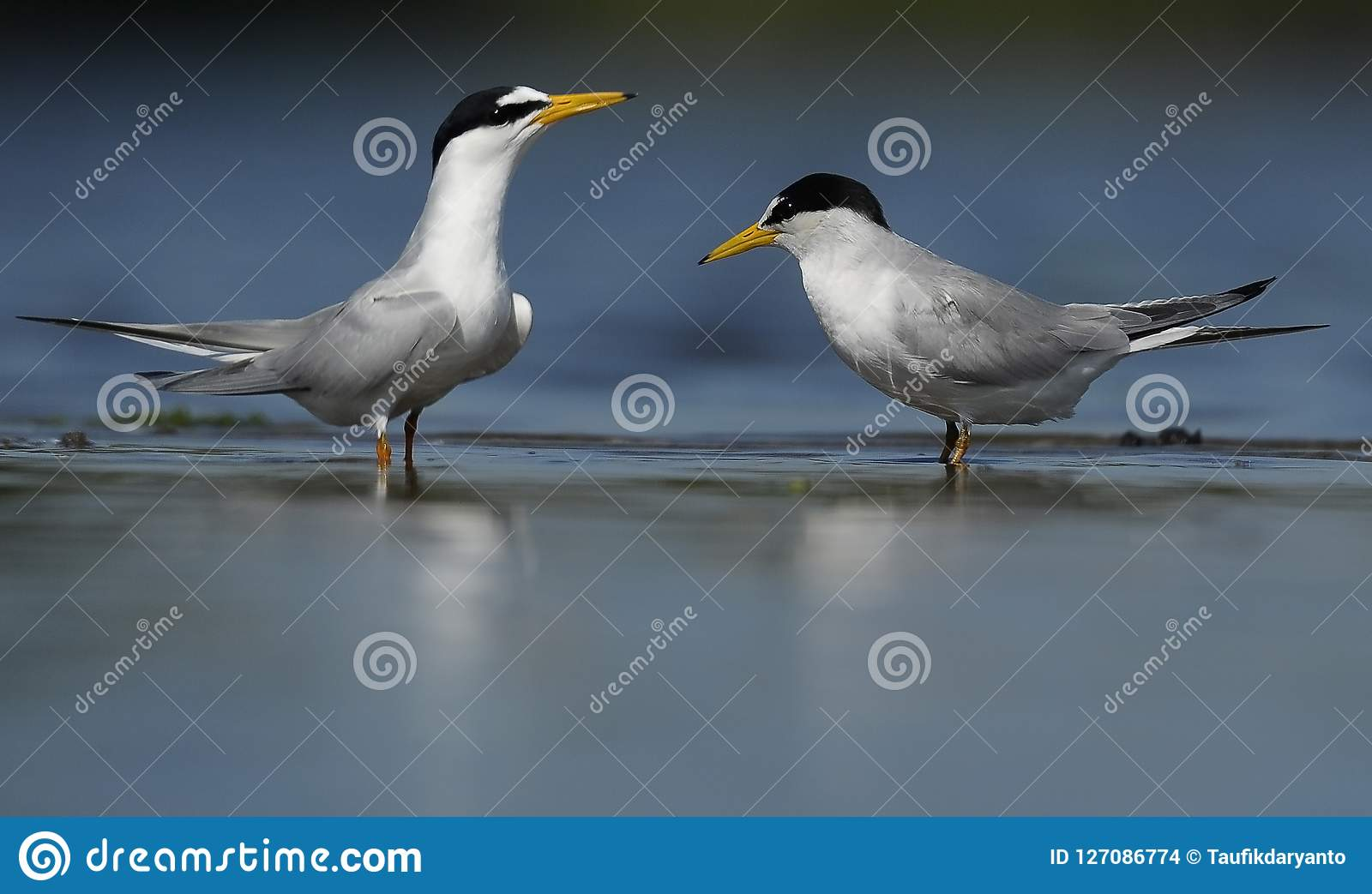 Seabird som två tillsammans spelar i flodbanken