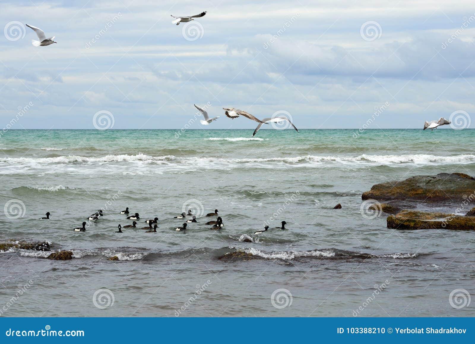 Birds of the Caspian sea.